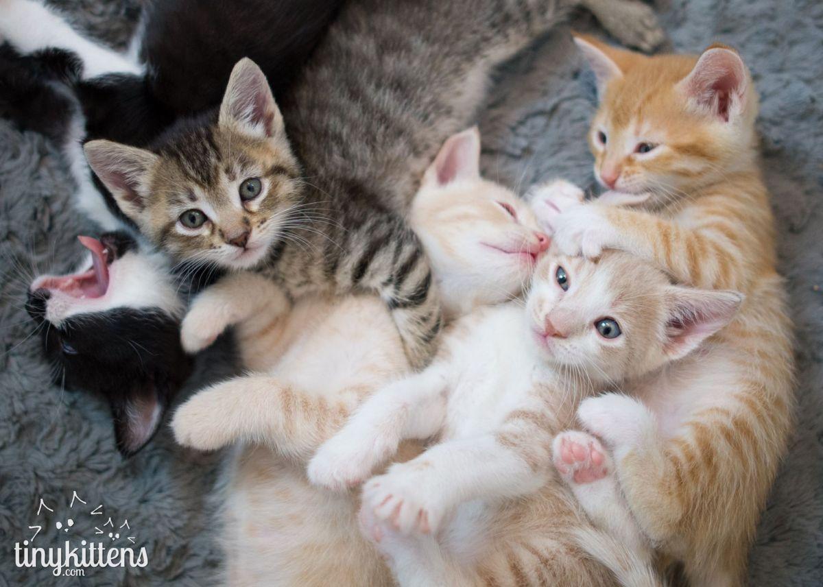 Kit necessário para adotar um gatinho e onde adotar