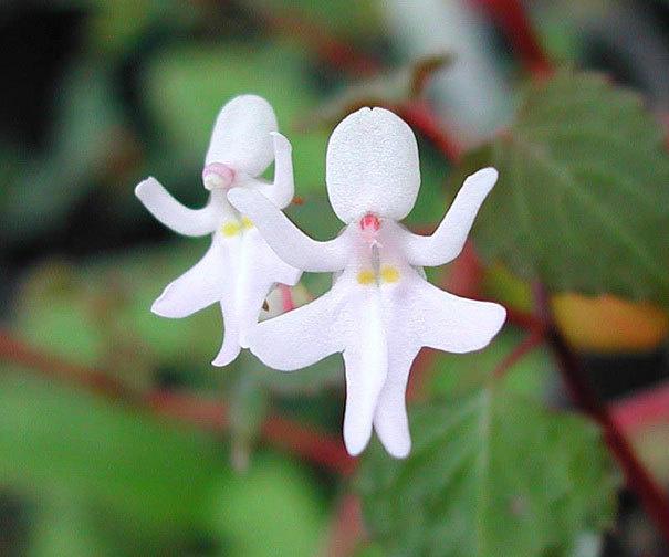 beleza-flores-11