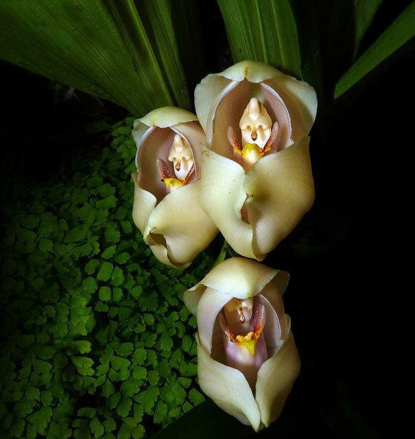 beleza-flores-15