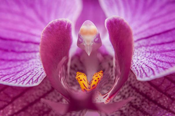beleza-flores-2