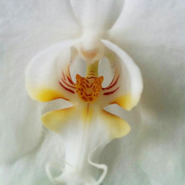 beleza-flores-22