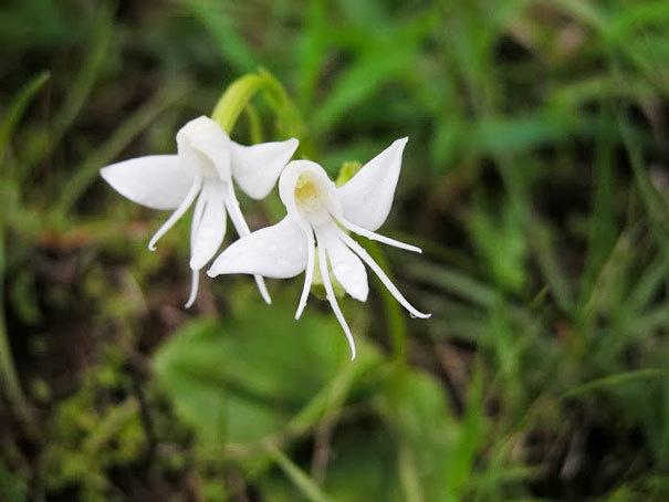 beleza-flores-26