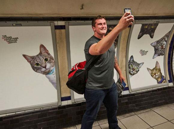 gatos-metro4
